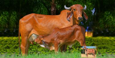Clonagem Animal Geneal Genetica biotecnologia