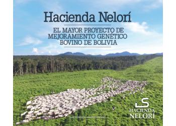 Maior criador de Nelore da Bolívia é parceiro Geneal