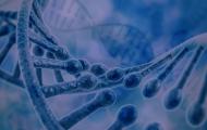 Leilões da 11ª Expogenética são divulgados