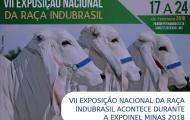 VII Exposição Nacional da Raça Indubrasil acontece durante Expoinel Minas 2018